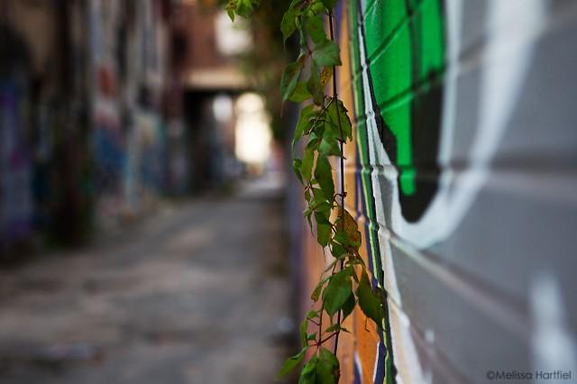 Vines and graffiti