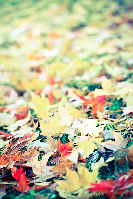 Autumn Leaves in bright light