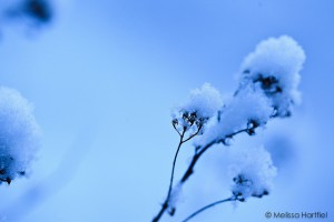 Snow on branches in blue light
