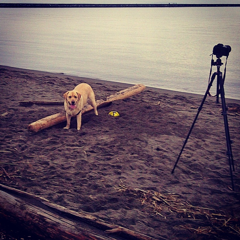 Dog, driftwood, tripod and ocean