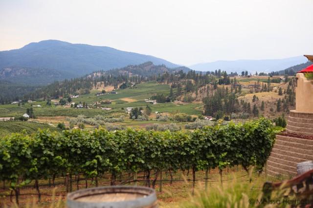 Okanagan vista of vineyards and orchards