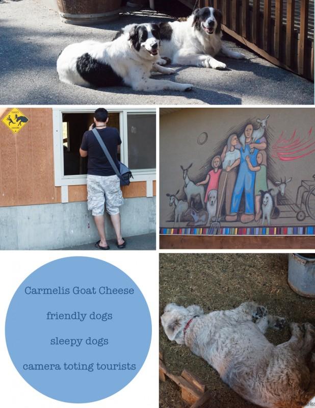 Carmelis Goat Cheese Artisan - Kelowna