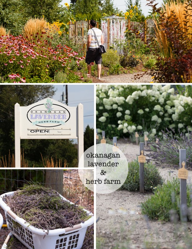 okanagan lavener and herb farm
