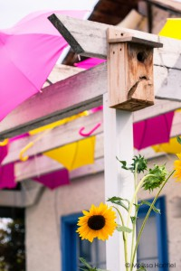 sunflowers and umbrellas