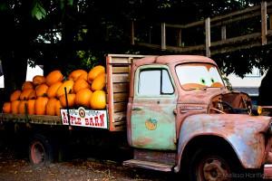 Apple Barn Pumpkins