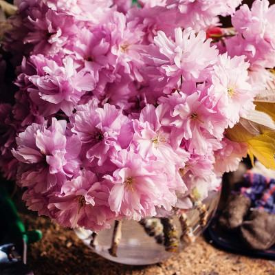 Cherry Blossom Season | Eyes Bigger Than My Stomach