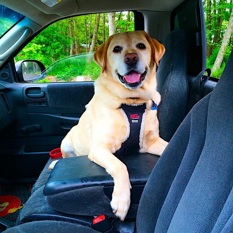 Our first day back at the park meant a very very happy doggie! Even if we had to drive there.