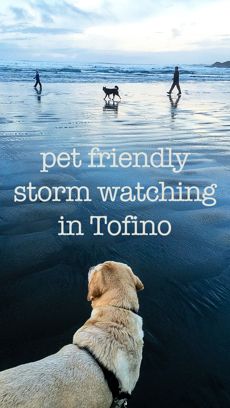 pet friendly storm watching in Tofino | eyes bigger than my stomach